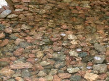 Vantaan Rekolanojan kutusoraikko